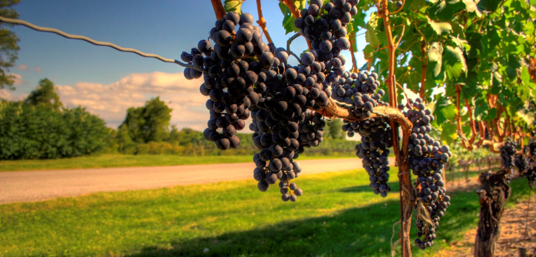 Long Island Wine Tours - Long Island Brewery Tours